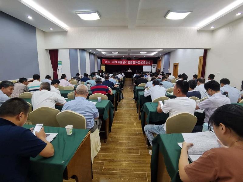 省vwin手机版管理站召开2019-2020年度省小麦新品种区试总结会
